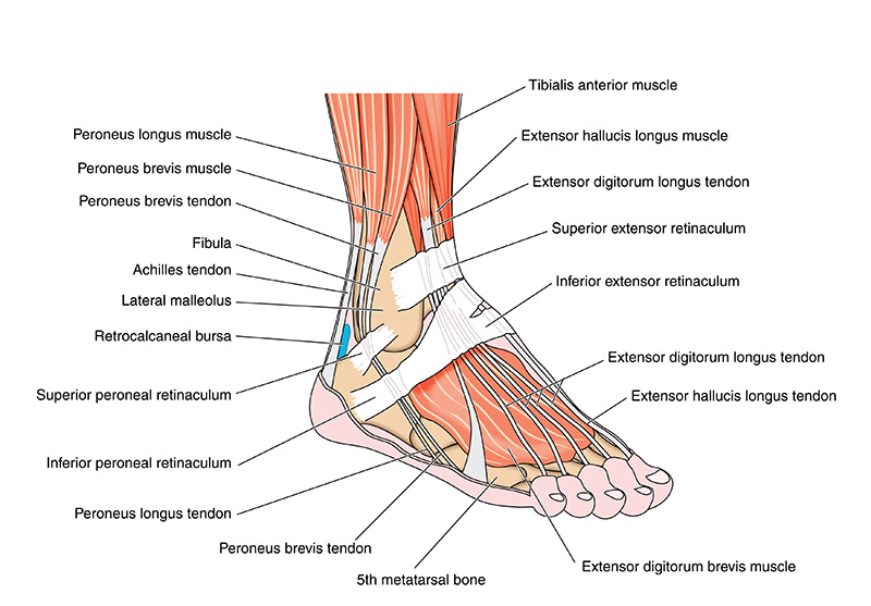 Ankle Pain: Common Causes and Treatments from Summa Pain Care